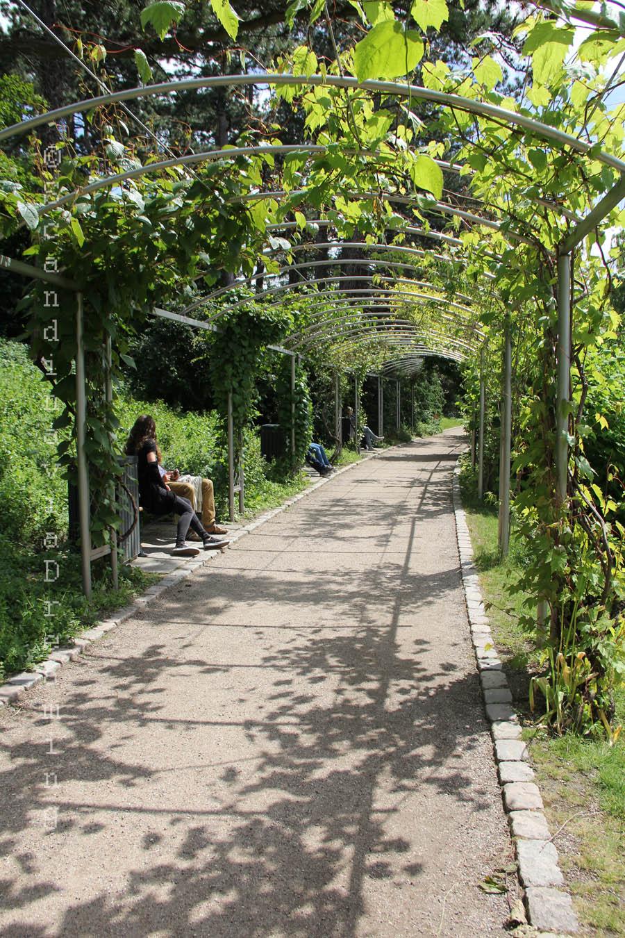 All e ombrag e au jardin botanique de copenhague for Au jardin des gourmets