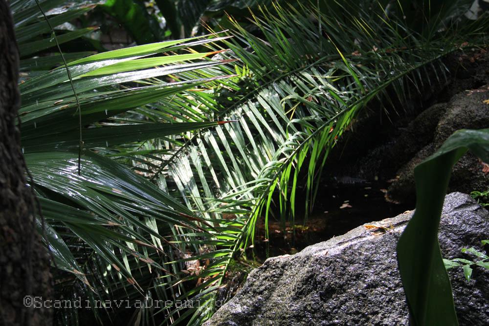 Arrosage dans la serre des plantes du jardin botanique de for Arrosage du jardin