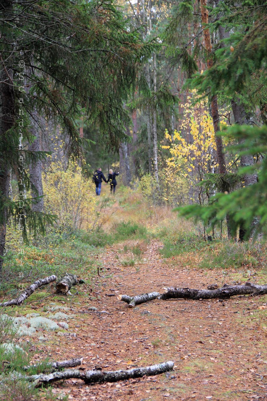 Un couple dans les bois scandinavia dreaming - Un matin dans les bois ...
