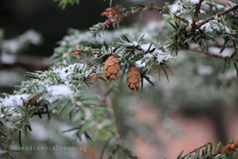 Jardin botanique oslo scandinavia dreaming for Rabais jardin botanique 2016